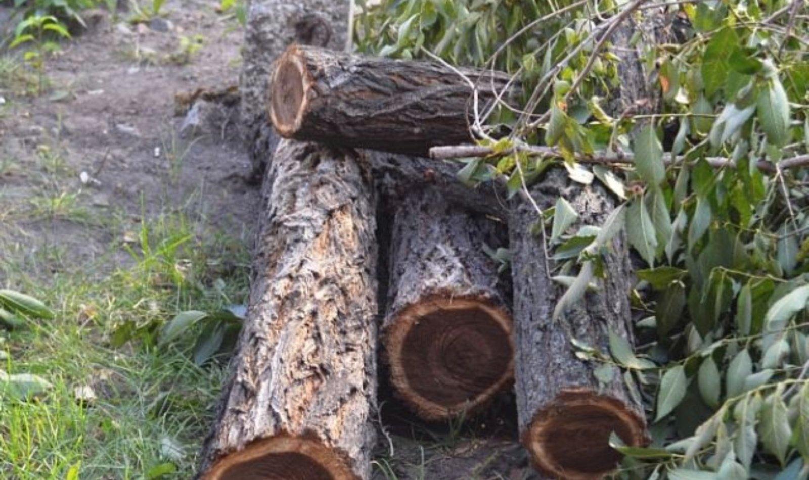 Visagine sumažės medžių