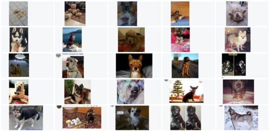 Už šuniukus balsuota net 962 kartus