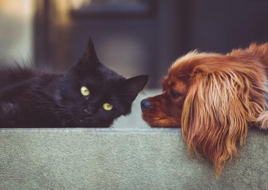 Šiaurės Lietuva dievina šunis, likusi jos dalis – kates