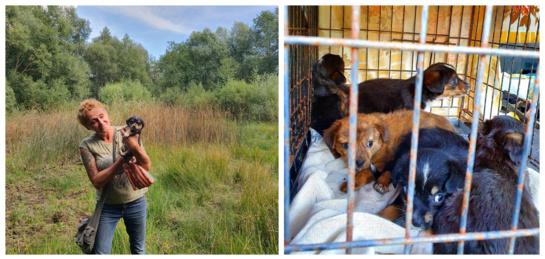 Šilėnuose ypatinga situacija – šunelių it grybų po lietaus