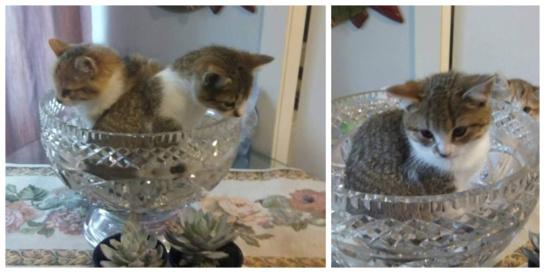 Namų ieško dvi mielos katytės