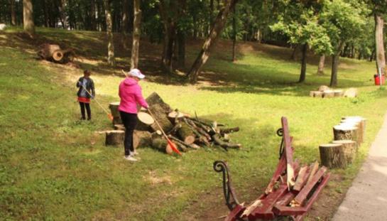 Grėsmę keliantys medžiai bus pašalinti