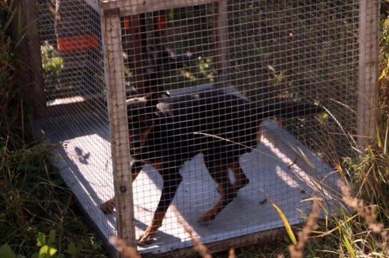 Panevėžio rajone apleistame name pareigūnai rado neprižiūrėtus šunis