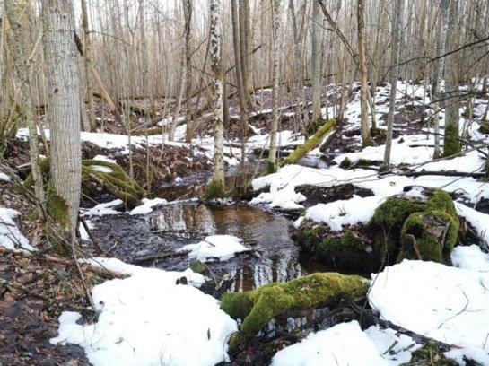Ekstremali nakvynė miške, vienumoje ir be išankstinio pasiruošimo