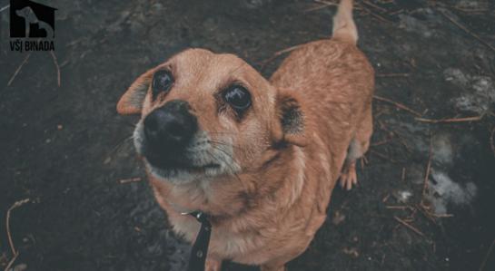 Šuniukas Rastis ieško namų