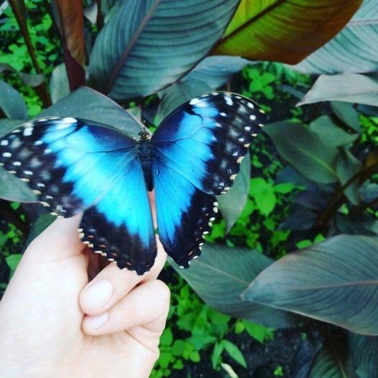Tropiniai drugeliai papuoš šventę, namus ir padės geriau suprasti gamtos pasaulį
