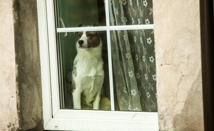Iš garažų bendrijos pavogtas šuo
