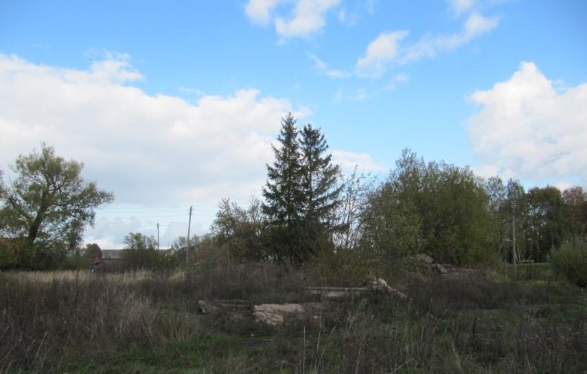 Planuojami tvarkymo darbai, medžių pjovimas