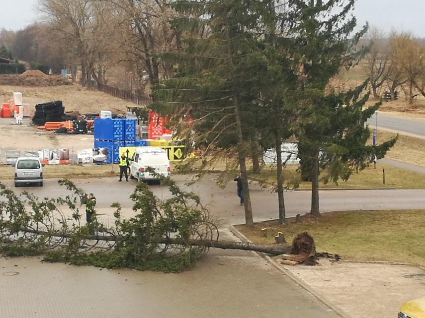 Stiprus vėjas vartė medžius, Tauragėje apgriovė sieną