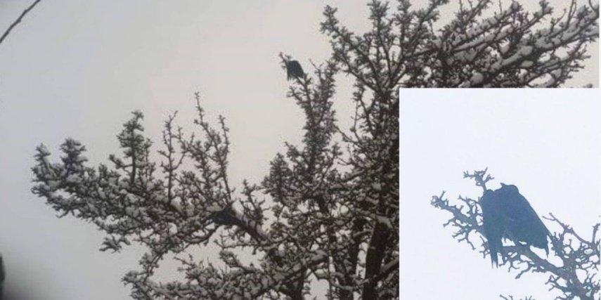 Ugniagesiai gelbėjo medyje įstrigusią varną