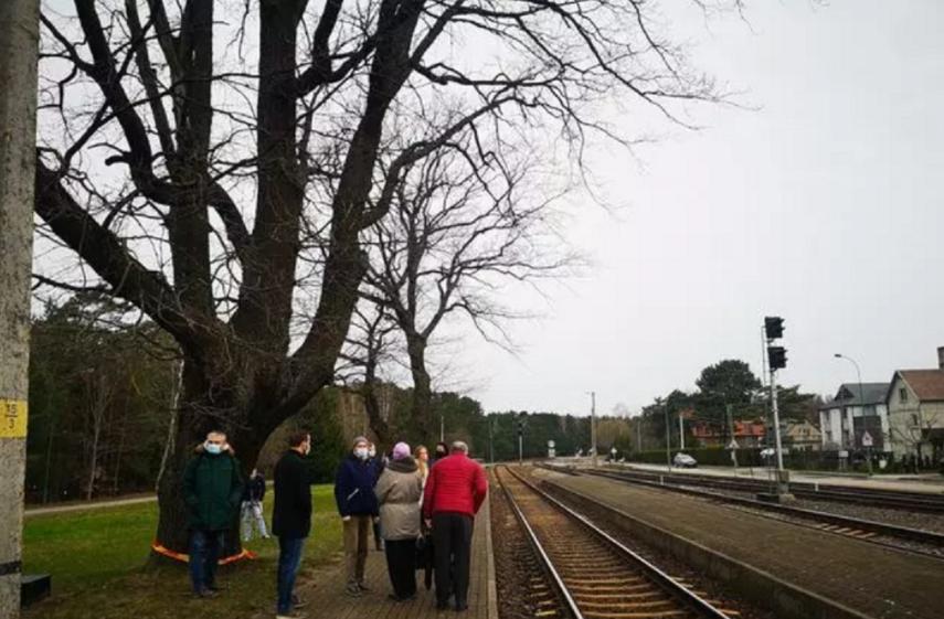 Girulių ąžuolus geležinkelininkai bandys išsaugoti