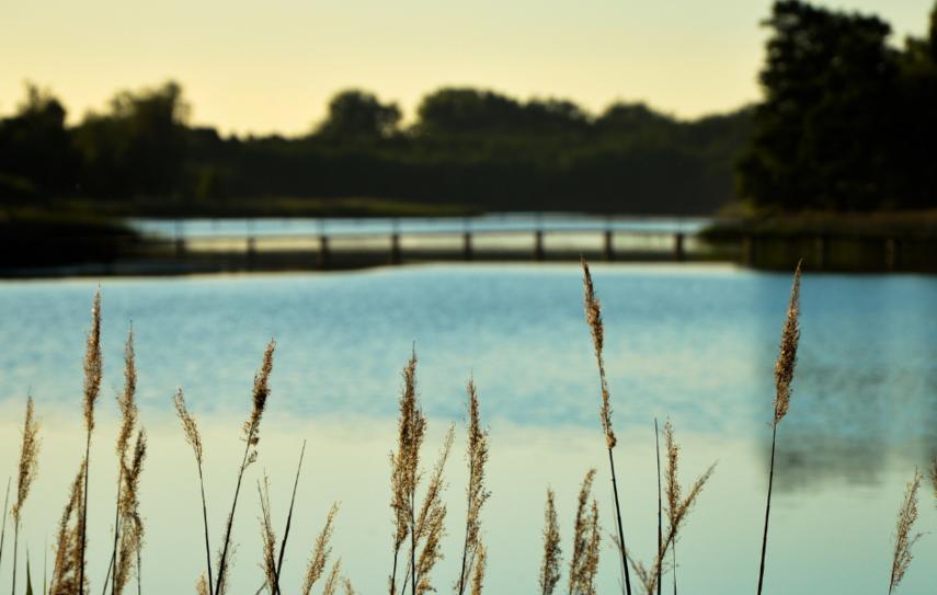 Įvertinta Joniškio rajone esančių vandens telkinių kokybė