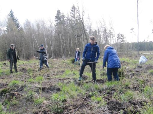 Miškasodžio talkoje pasodinta daugiau nei 3000 eglaičių