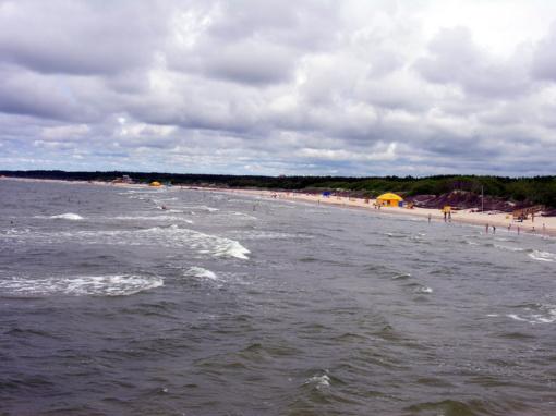 Jūrų muziejus į Baltijos jūrą paleido du ruoniukus