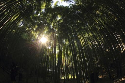 Kovojant su vienuoliu verpiku, pavasarį bus purškiami miškai