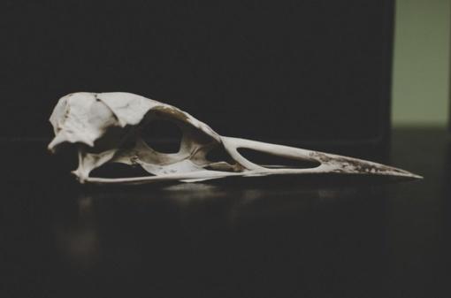 Darbininkai rado kaulus