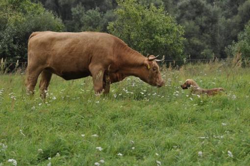 Saugokime gyvūnus nuo karščių