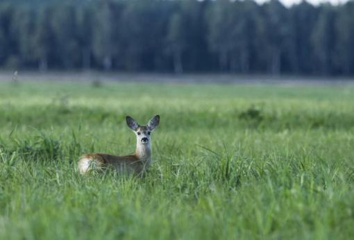 Parsineštas namo sveikas jauniklis – meškos paslauga gamtai
