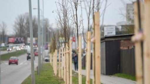 Kaunas neteisėtai savo įmonei pavedė prižiūrėti želdinius