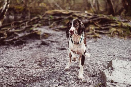 Kur kreiptis pastebėjus kenčiančius ar neprižiūrėtus gyvūnus?