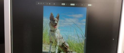 Šunų mylėtojams - naujas leidinys: susipažinkite su atmintine, skirta besilankantiems Neringoje su augintiniu