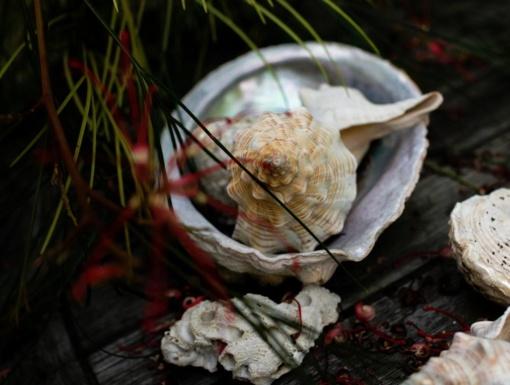 Muitinėje sulaikyti koralai ir kriauklės atostogautojų parsivežti neteisėtai