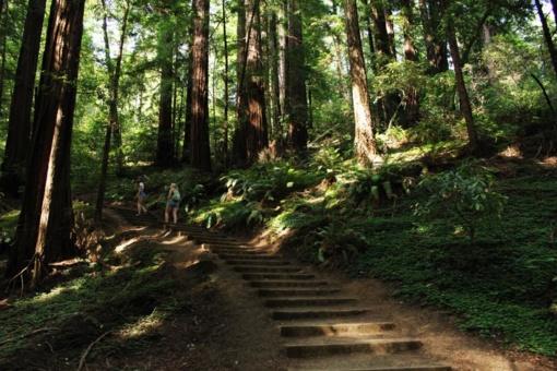 Šiemet ligos ir kitos negandos pažeidė mažesnį miškų plotą nei pernai