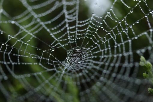 Atšilo orai – pabudo vorai