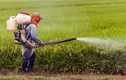 Pesticidai gali pridaryti žalos sveikatai