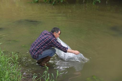 Mažeikių rajono upės praturtintos margaisiais upėtakiais