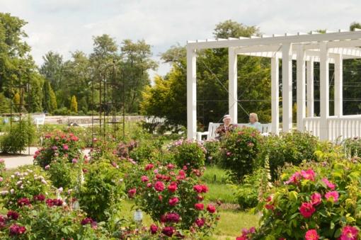 Botanikos sode – per 1000 rožių veislių
