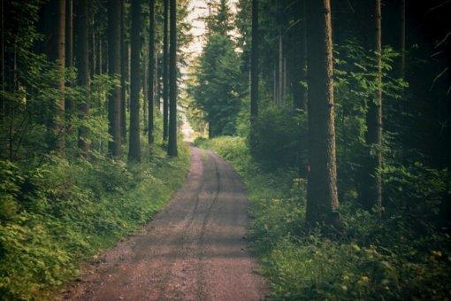 Aplinkos ministerija: pertvarkos tikslas – nauda miškui ir valstybei