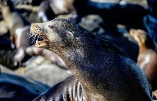 Tyrimas dėl žuvusių ruonių - be rezultatų