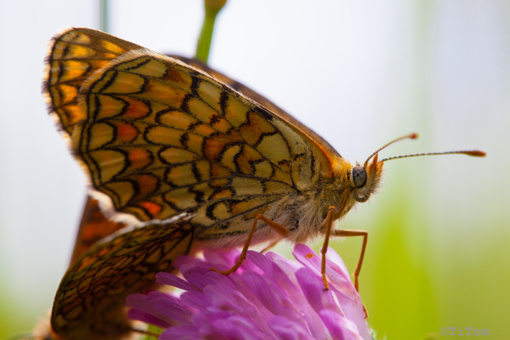 Druskininkuose duris atveria unikali tropinių drugelių paroda