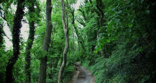 Aplinkos ministras pristatė miškininkams urėdijų reformą