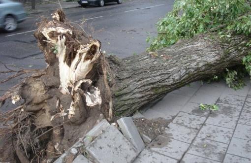 Ugniagesiai pašalino daugiau kaip 150 nuverstų medžių
