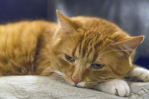 Gyvūnų globėja iš Birštono turės sumokėti baudą už veterinarinių reikalavimų nesilaikymą