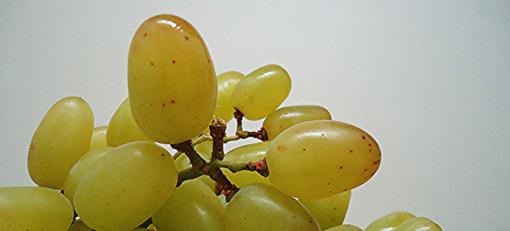 Neleista importuoti pesticidais užterštų vynuogių siuntos