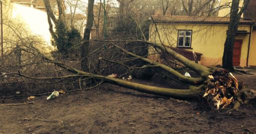 Vėjas vartė medžius ant automobilių, lietus apsėmė kelis rūsius