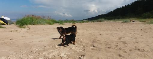 Šalyje pradėjo veikti pirmasis šunų paplūdimys