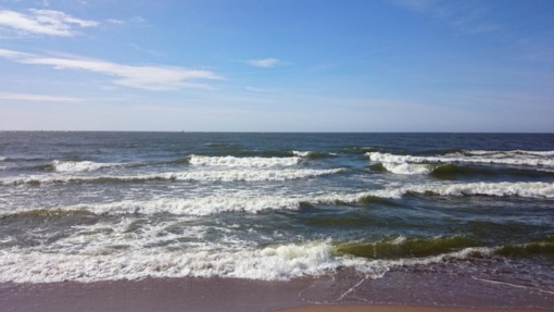 Baltijos jūroje susidarė palankios sąlygos daugintis pavojingoms bakterijoms