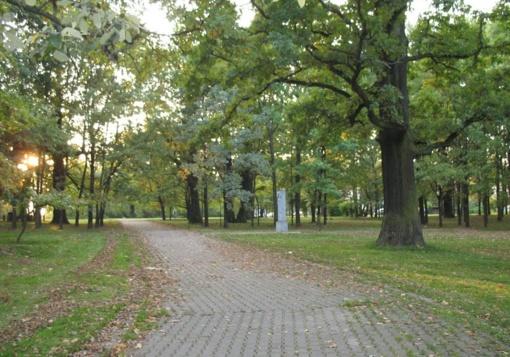 Kaunas rengiasi skelbti konkursą Ąžuolynui sutvarkyti