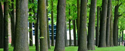 Masiniam medžių kirtimui miestuose gali ateiti galas