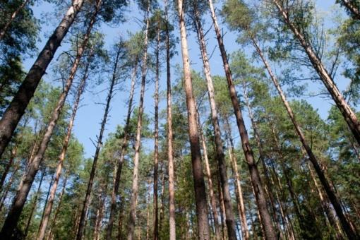 Miškų valdymo pertvarka pradedama nuo dialogo su kiekviena urėdija