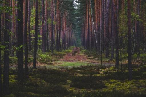 Ugniagesiai įspėja apie didėjantį miškų gaisringumą
