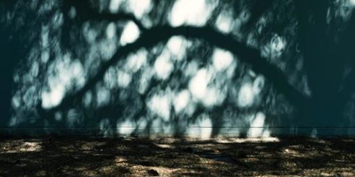 Dėl stipraus vėjo keliuose gali būti nuvirtusių medžių
