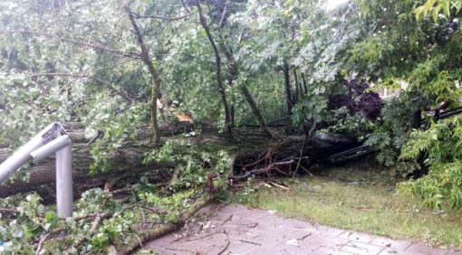 Šalyje siaučia vėjas: nulaužti medžiai, apgadintas turtas
