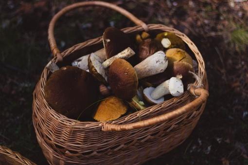 Baravykų pintinės priverčia prisiminti senus ir ieškoti naujų receptų