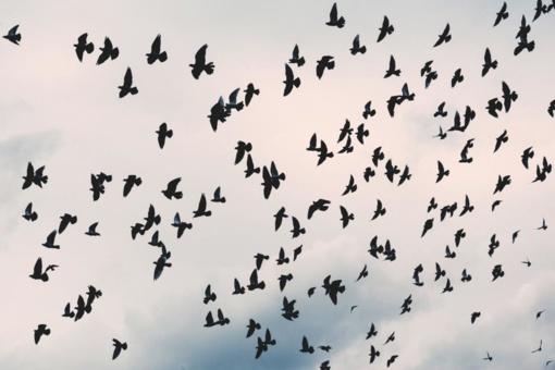 Į šiltus kraštus palydimi paukščiai