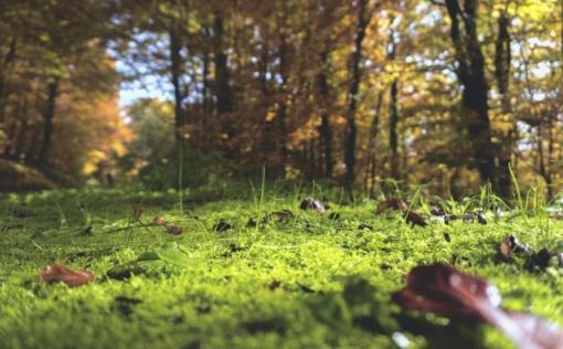 Šimonių girioje pradingo uogauti išėjęs senolis